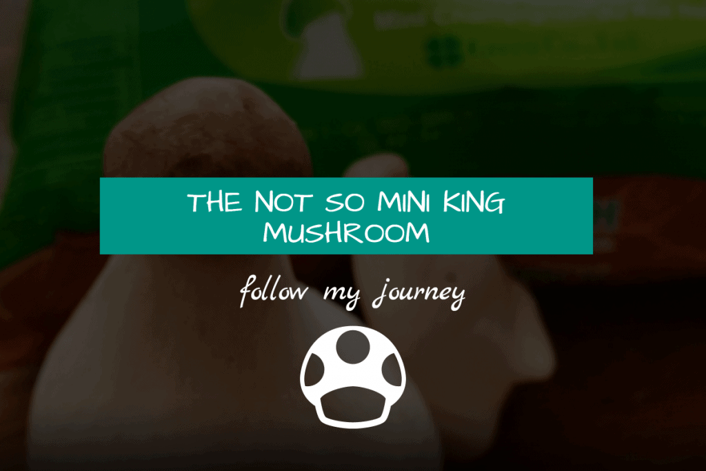 not so mini king mushroom