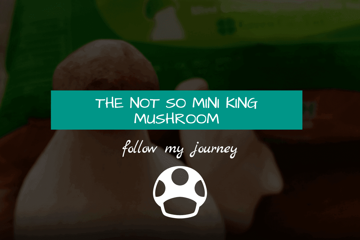 not so mini king mushroom